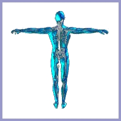 A chiropractic view of the human body