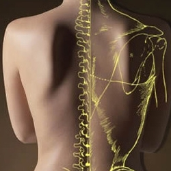 A chiropractic view of a human back